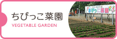 ちびっこ菜園